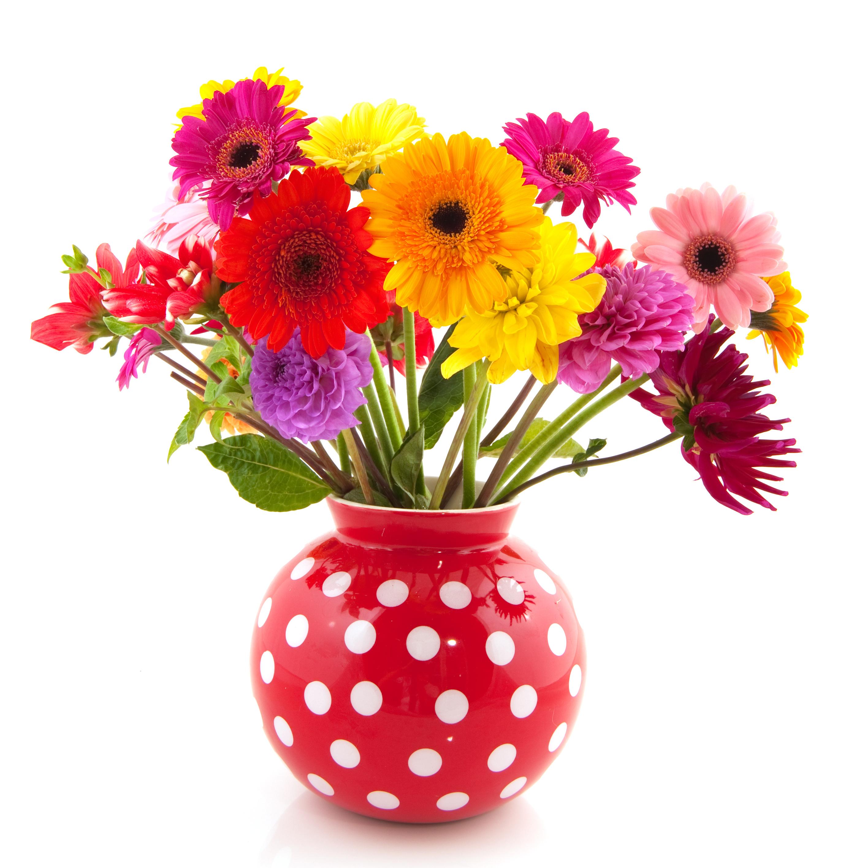 La fleur de gerbera symbole de gaiet par fleuristes et for Fleuristes et fleurs