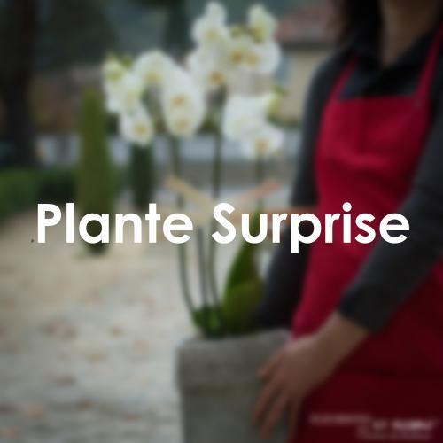 La Plante Surprise