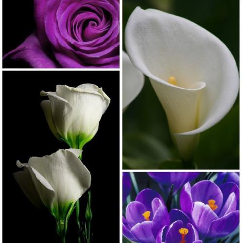 enchantement fleurs