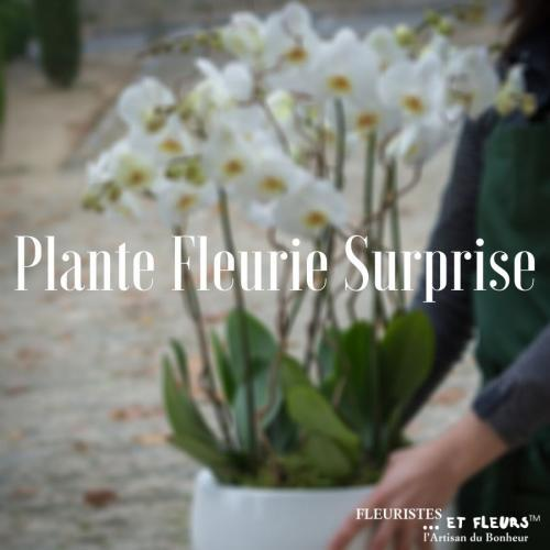 Plante Fleurie Surprise